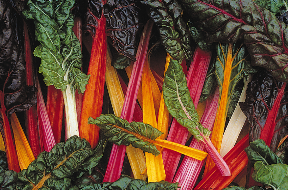 what is chard chard is a vegetable look